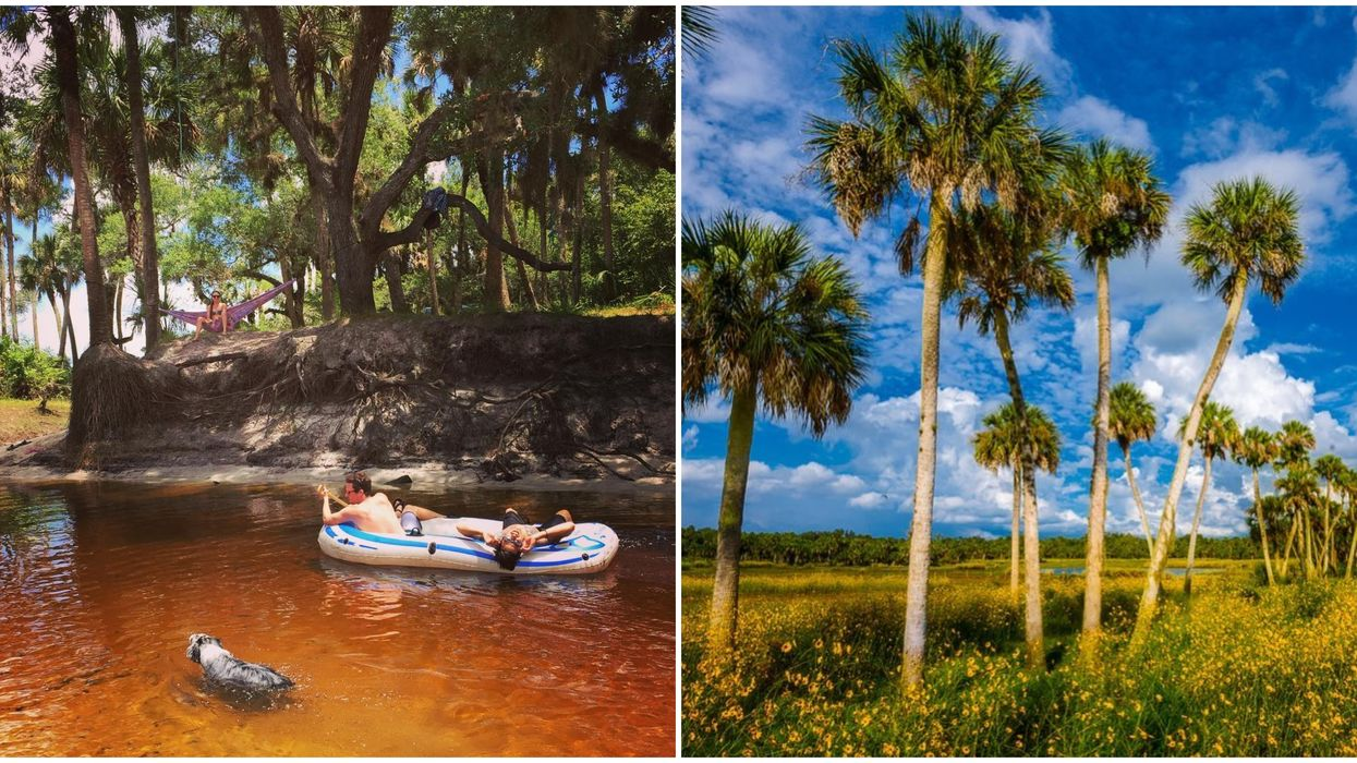 You Will Feel Like You Are In A Tropical Paradise At This Florida Forest