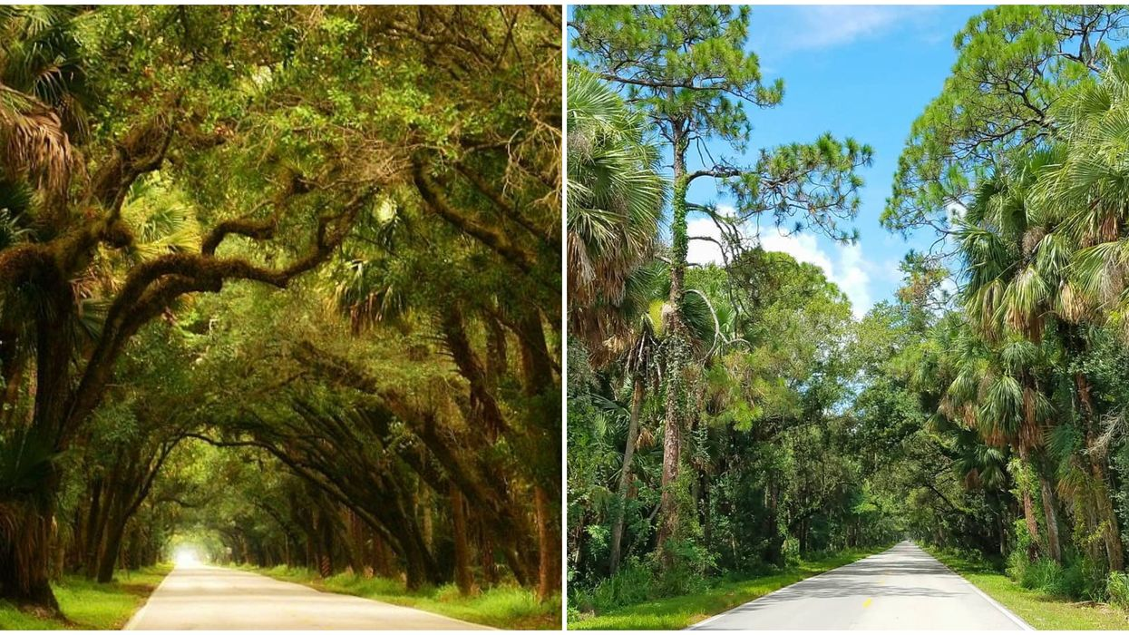 This Highway In Florida Will Be Your Most Scenic Road Trip Destination This Summer
