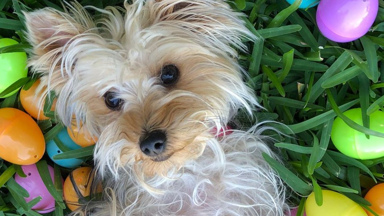 Sparky Will Have A Doggone Good Time At This Easter Egg Hunt For Dogs In Jacksonville