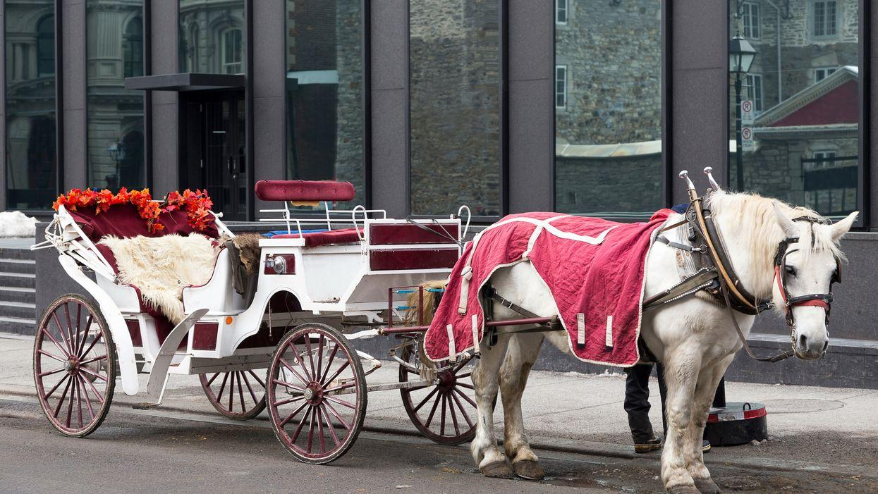 Les calèches vont bientôt être interdites à Montréal et voici ce qu'il va se passer avec les chevaux