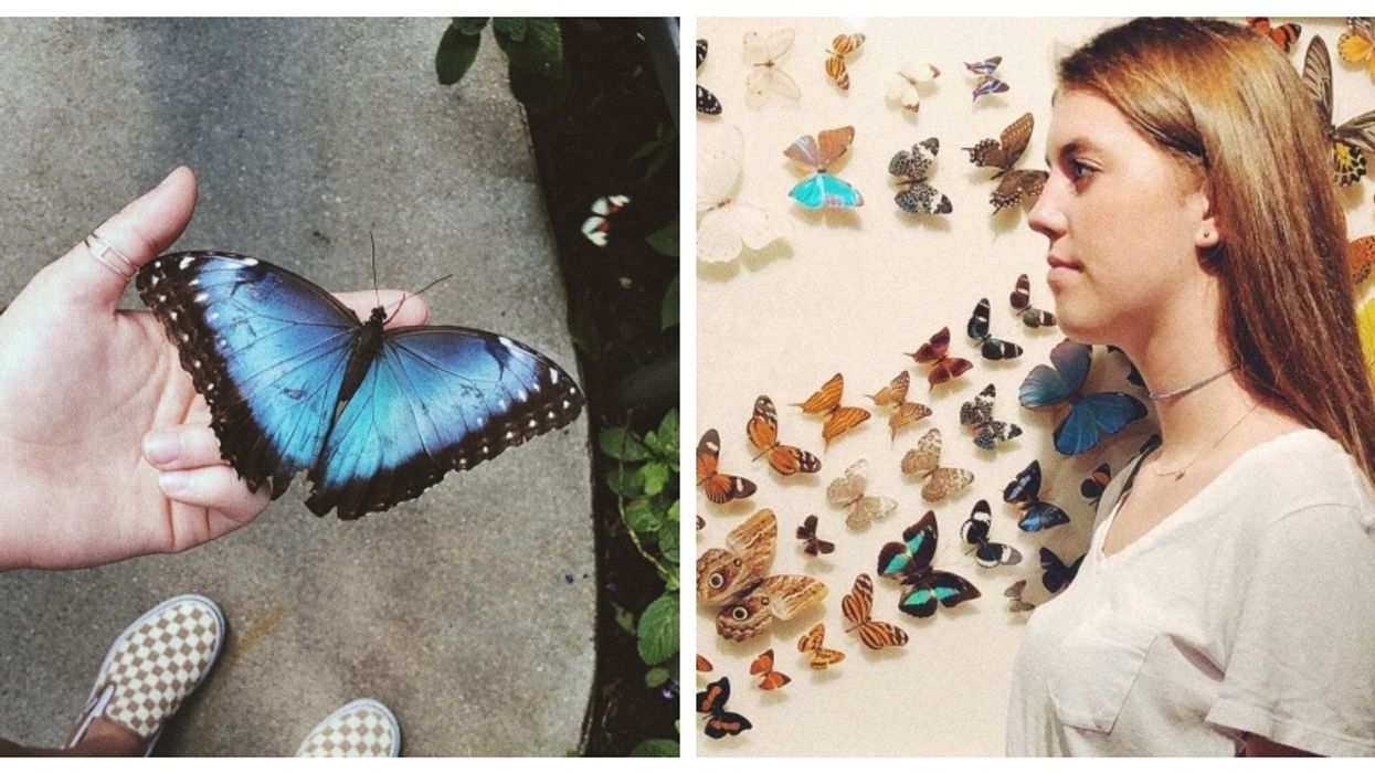This Place In Florida Transports You Into A Magical World Of Free Flying Butterflies