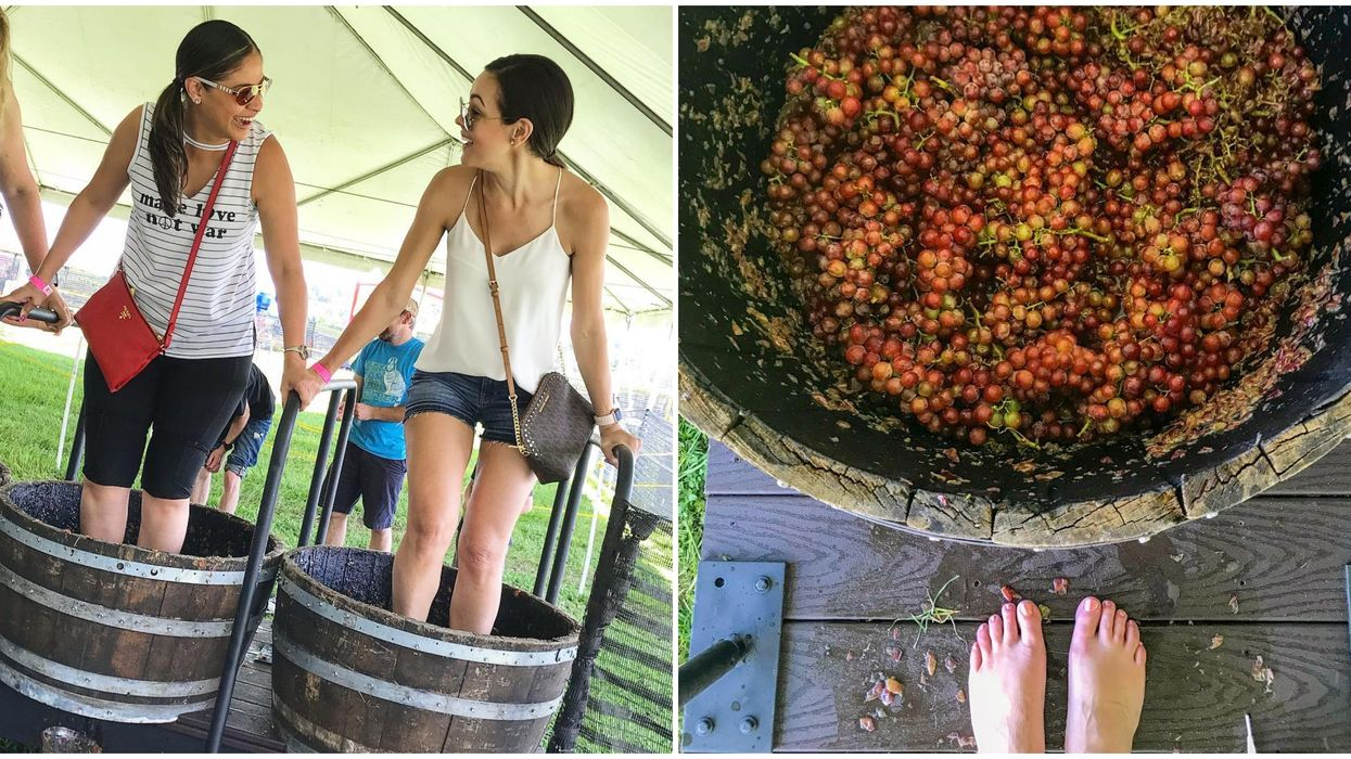 You Can Actually Stomp Some Grapes At This Florida Vineyard