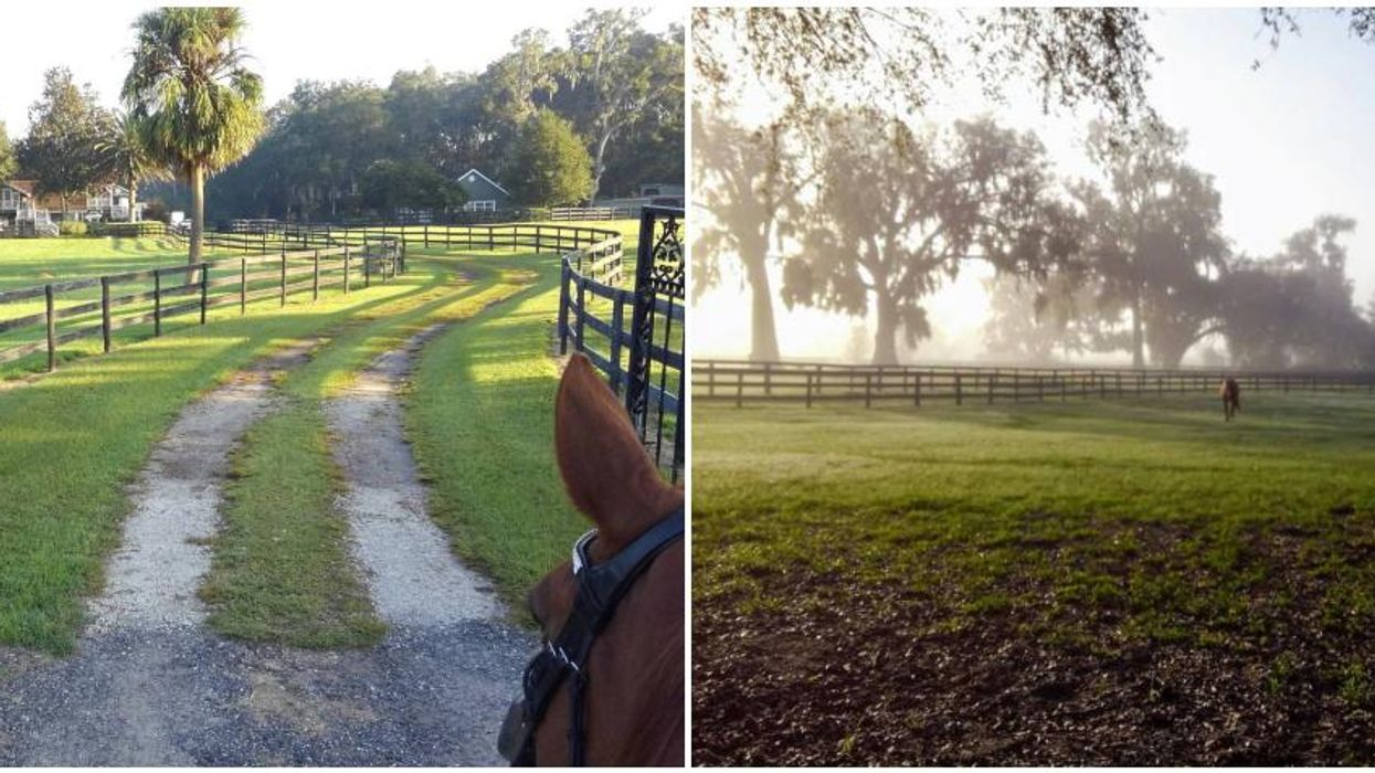 You Can Vacation At This Horse Farm Oasis In Ocala For Super Cheap