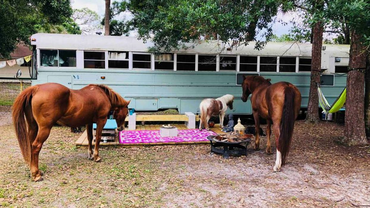 You Can Spend A Night In This Bus Surrounded By Horses In Florida For Super Cheap