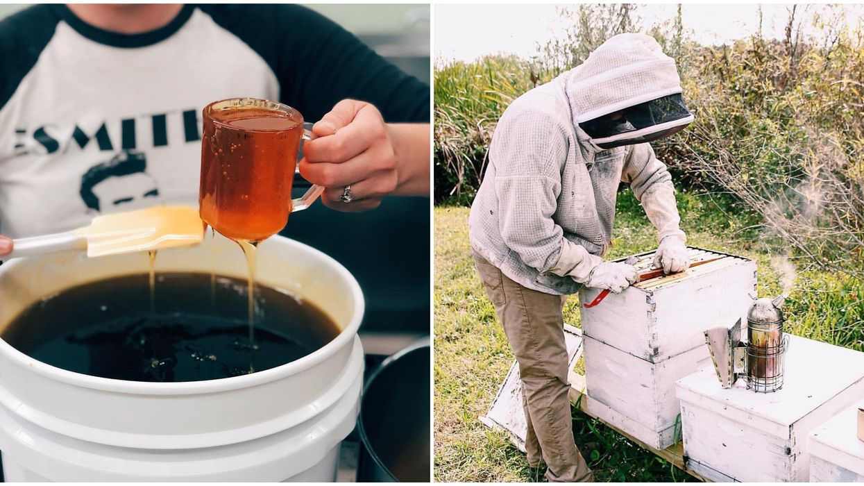 This Place In Florida Lets You Harvest Your Very Own Jar Of Local Honey
