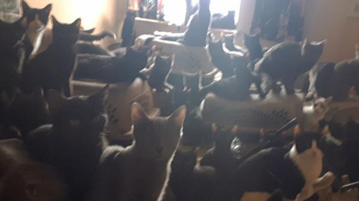 Toronto Warning Cat Owners How Many Cats Is Too Much After 300 Cats Were Rescued From A Single Owner