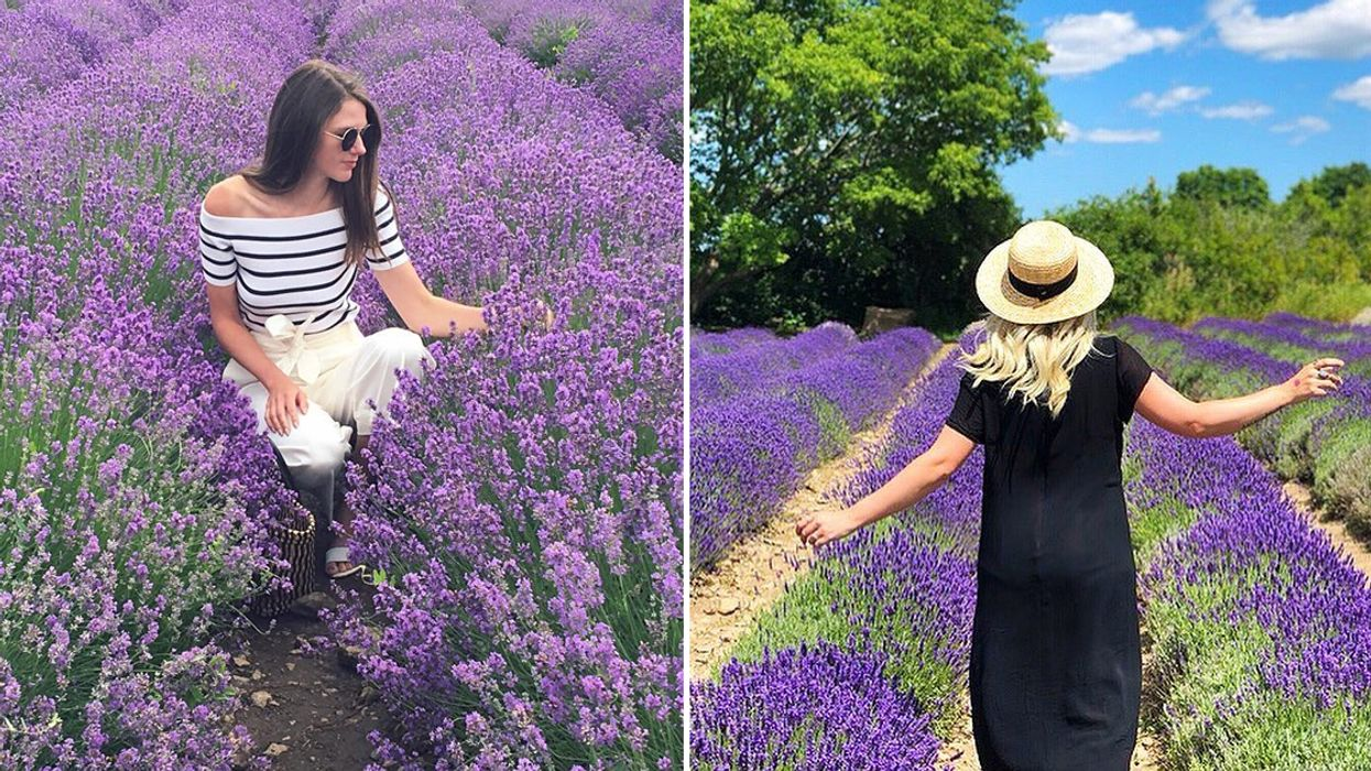 You Need To Visit This Hidden Lavender Farm In Ontario This Summer