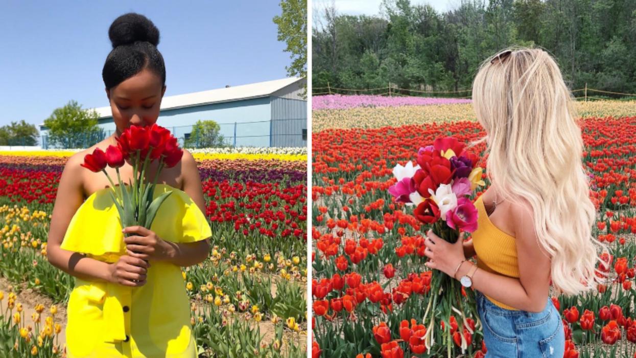 Un festival de plus de 500 000 tulipes aura lieu en mai à Laval et tu ne veux pas manquer ça