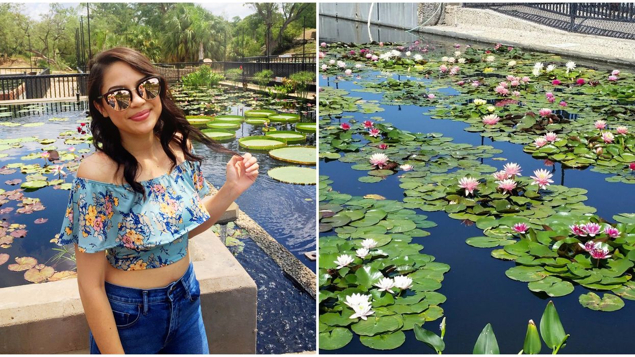 You Can Visit This Beautiful Hidden Waterlily Garden In Central Texas For Free