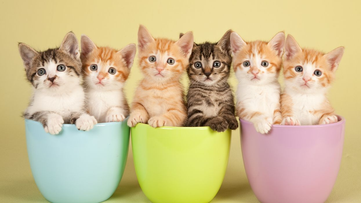 Edmonton Is Hosting A Cat Festival This Summer And It's Going To Be Purr-fect