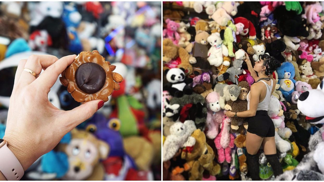 This Florida Chocolate Shop Has Over 100 Different Flavors And The Wildest Stuffed Animal Wall