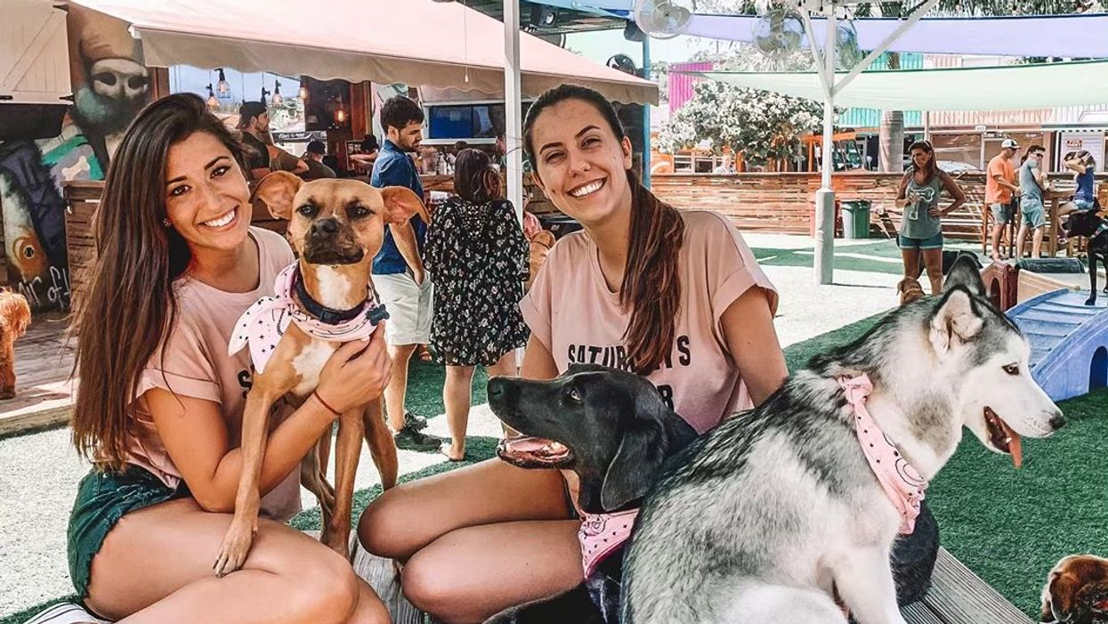 St. Pete Has The Coolest Upscale Dog Park With A Dog Friendly Bar