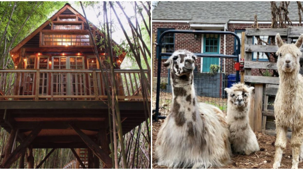 You Can Stay In Atlanta's #1 Most Wish-Listed Treehouse Airbnb For Cheap This Summer