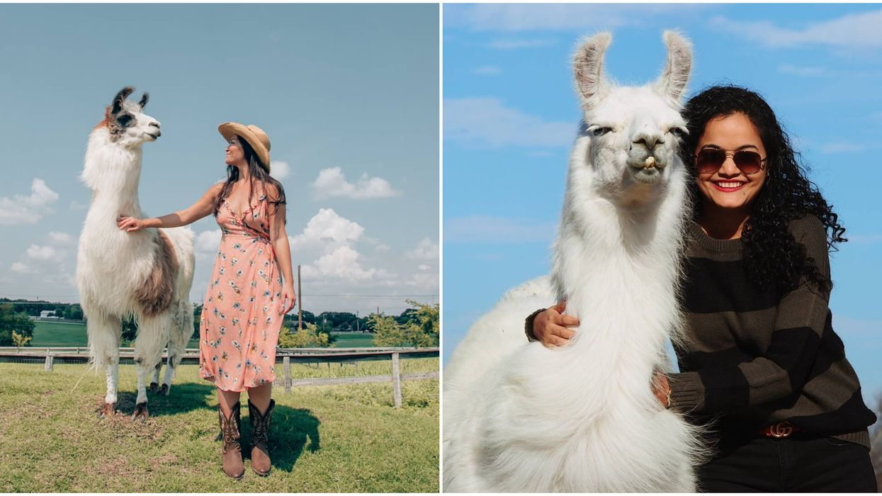 You Can Hang Out With Llamas In An Actual Castle Near Dallas