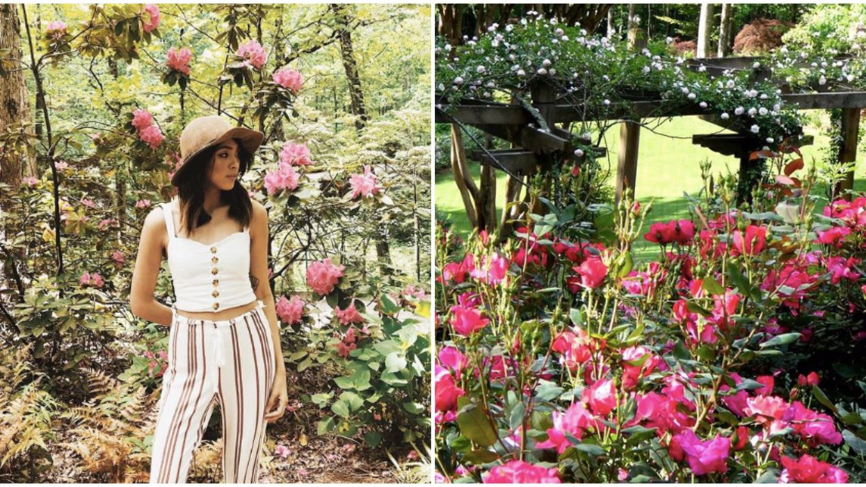 You Can Stop And Smell Hundreds Of Roses At This Massive Garden In North Georgia