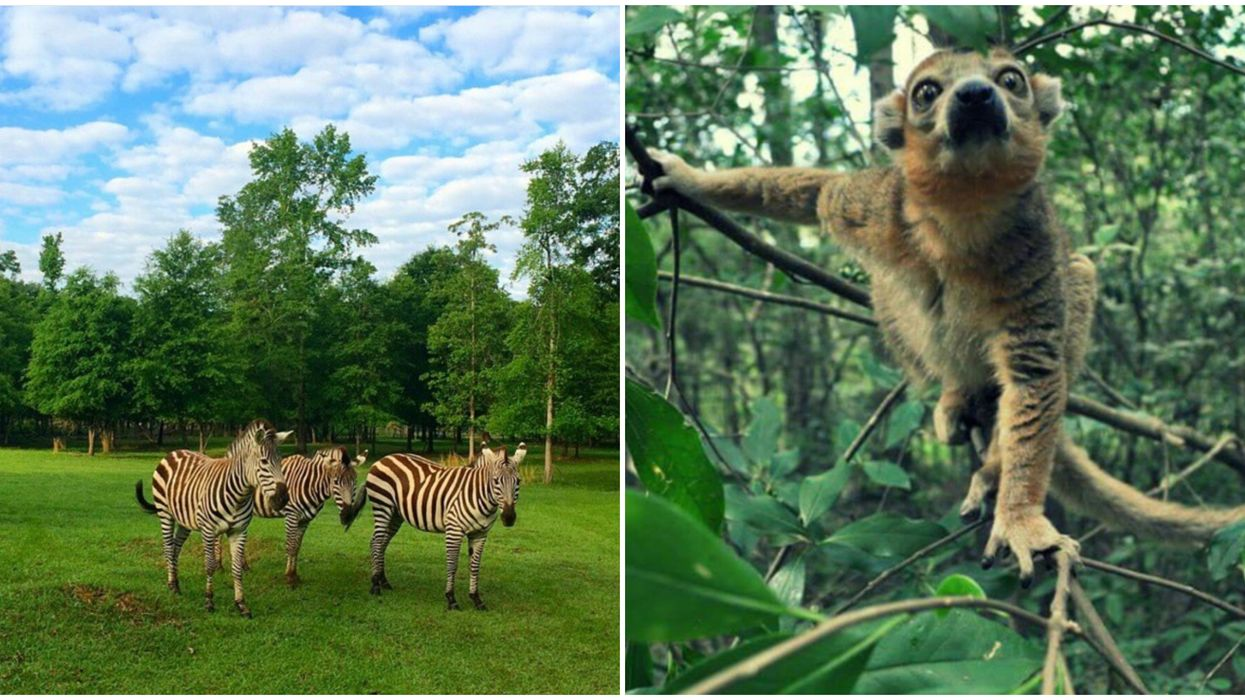 This 700-Acre Wildlife Park In Georgia Will Have You Feeling Like You're In A Jungle