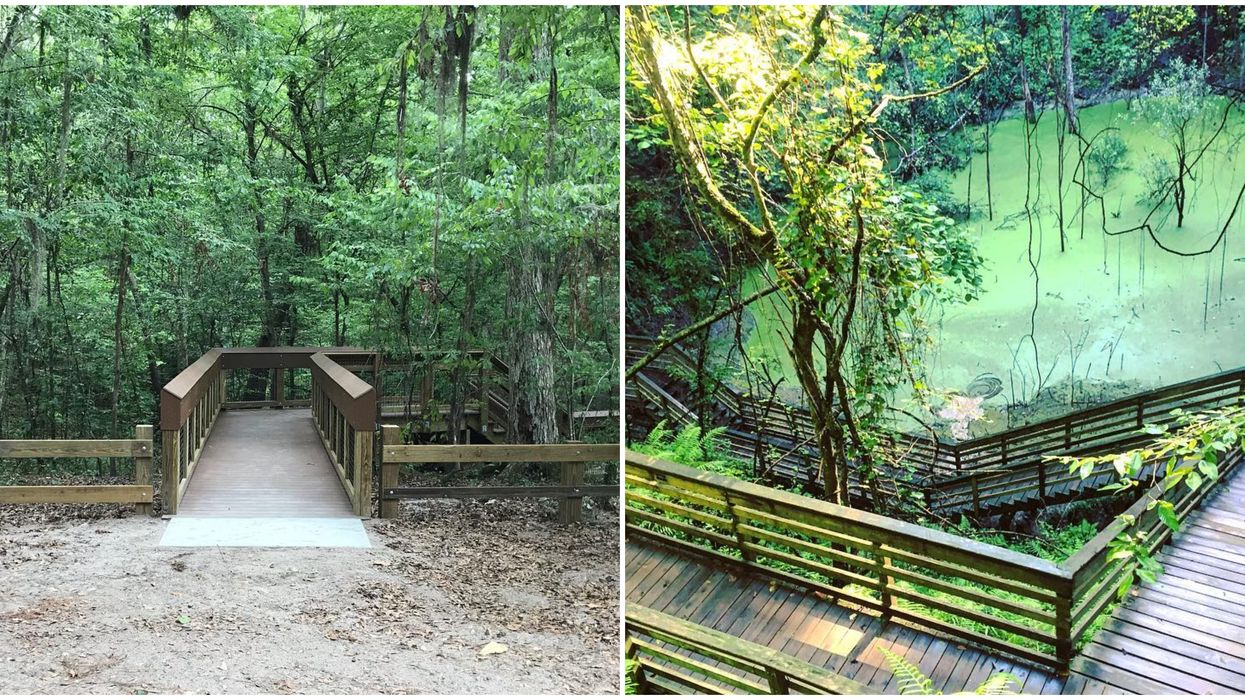 Most stretches of boardwalk will lead you to a pristine Florida beach - but this boardwalk takes you on a little adventure into the jungle. The new boardwalk at The Devil's Millhopper State Park has finally opened as of today - and leads you down to a gorgeous hidden mini rainforest.