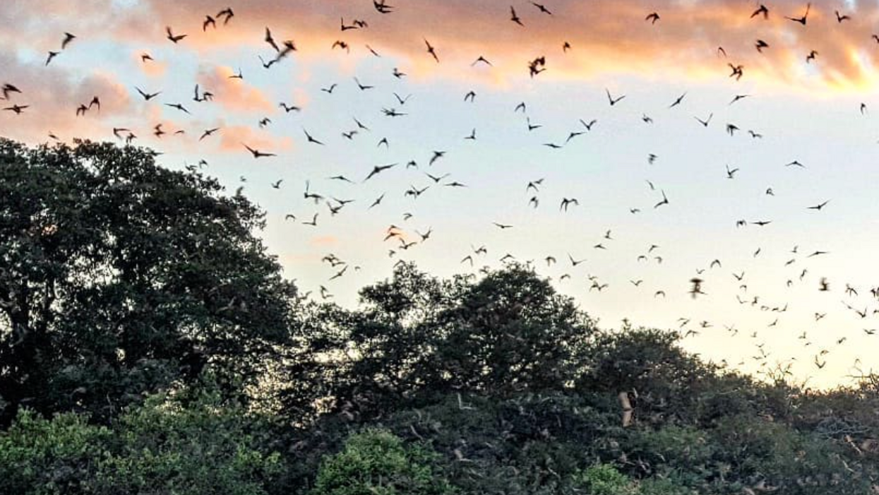 You Can Watch 20 Million Bats Emerge Into The Sky At This Preserve In San Antonio