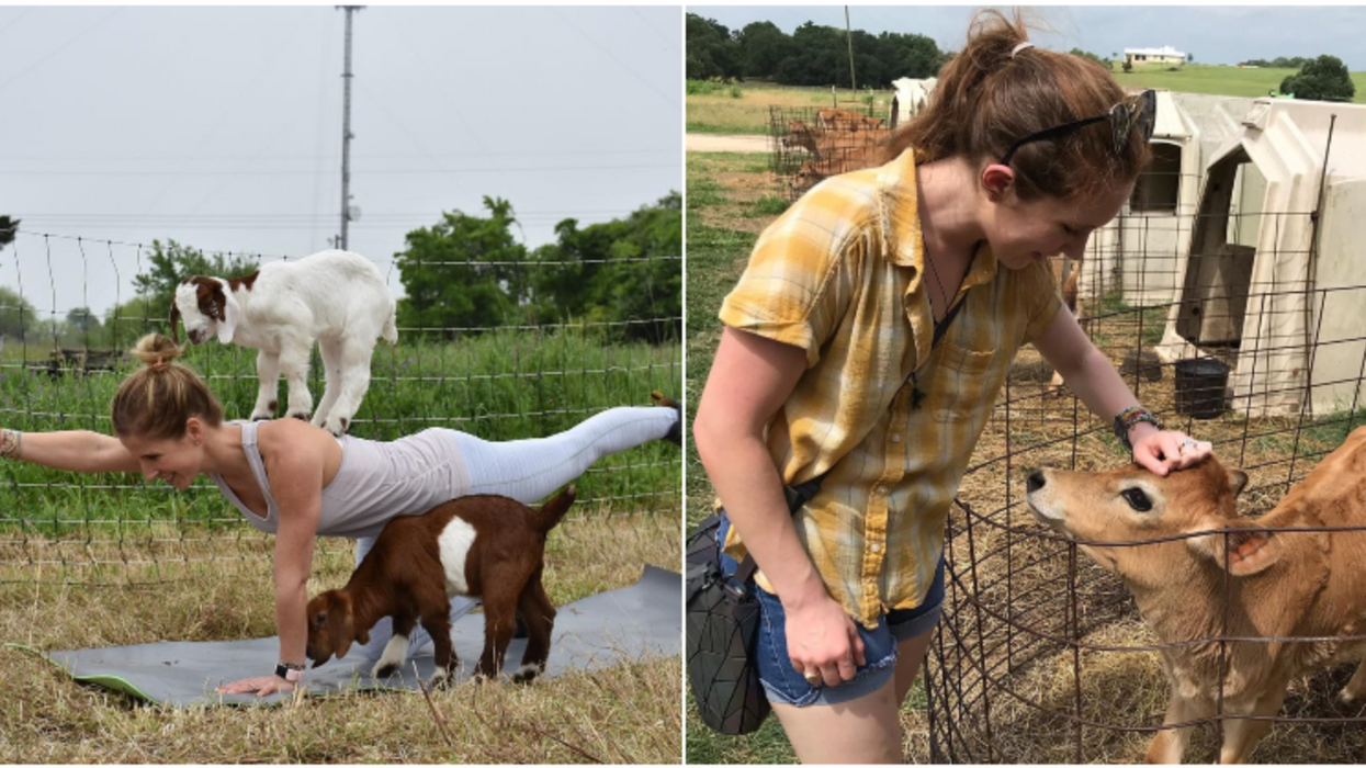 You Can Play With Baby Goats And Feed Calves At This Adorable Houston Farm