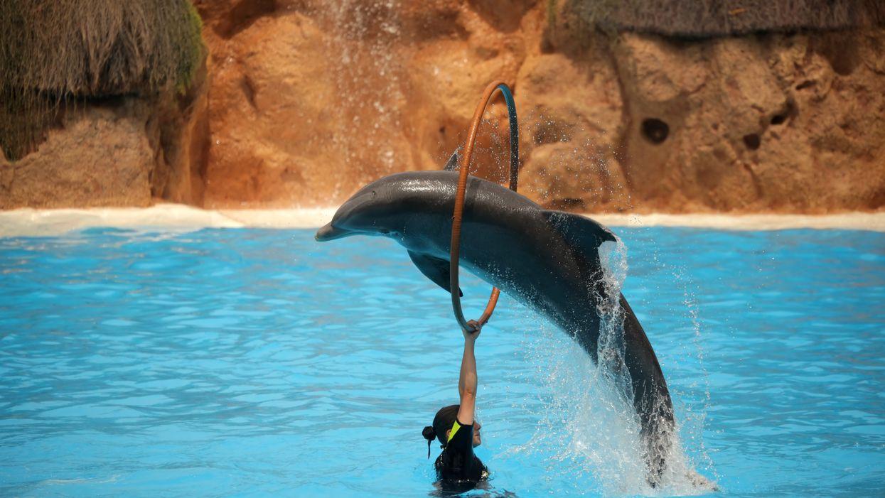 Les dauphins, baleines et marsouins ne pourront plus être gardés en captivité pour le divertissement au Canada