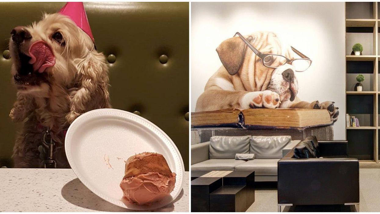 Tu peux aller en date avec ton chien dans ce resto sur la Rive-Sud de Montréal et c'est la chose la plus cute ever