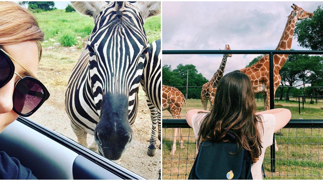 You Can Feed Exotic Animals At This Beautiful Safari Near San Antonio