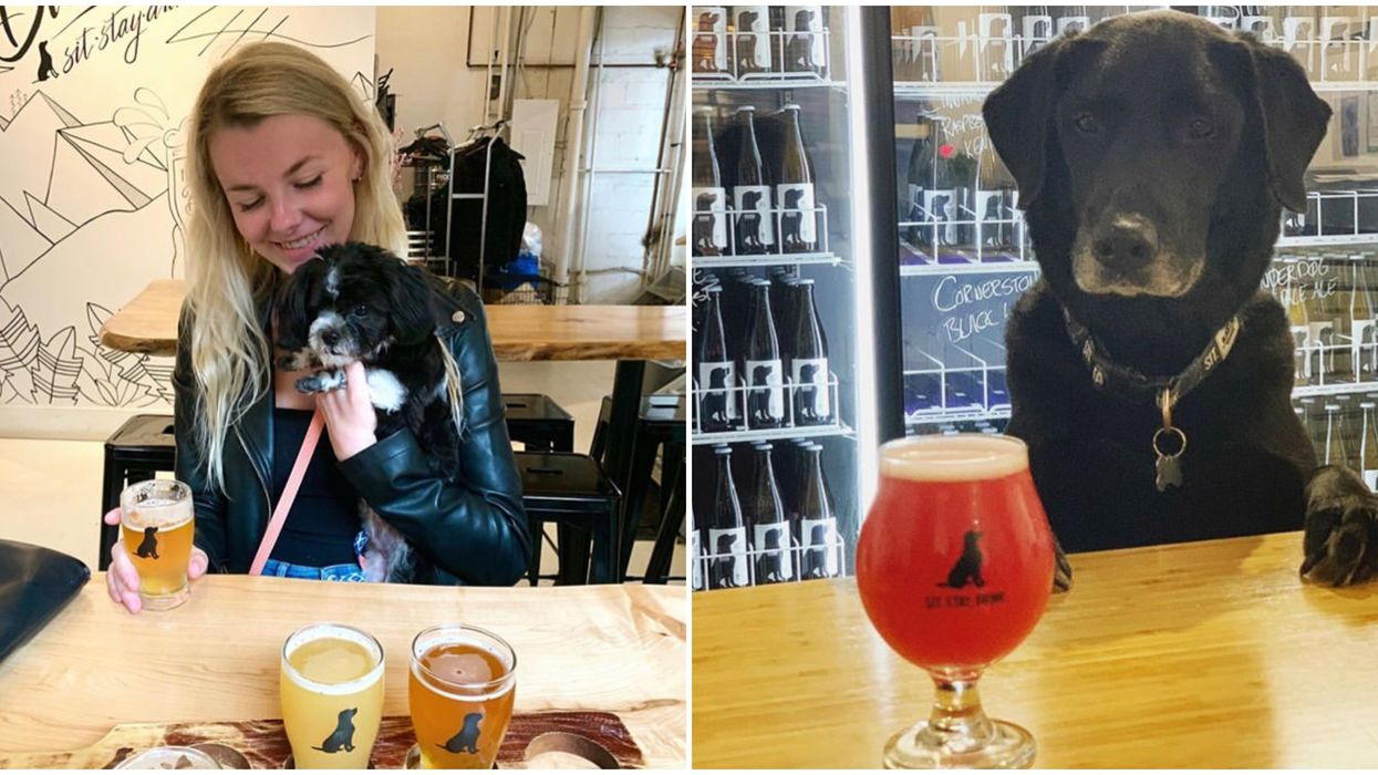 10 Restaurants In Toronto You Can Bring Your Dog To