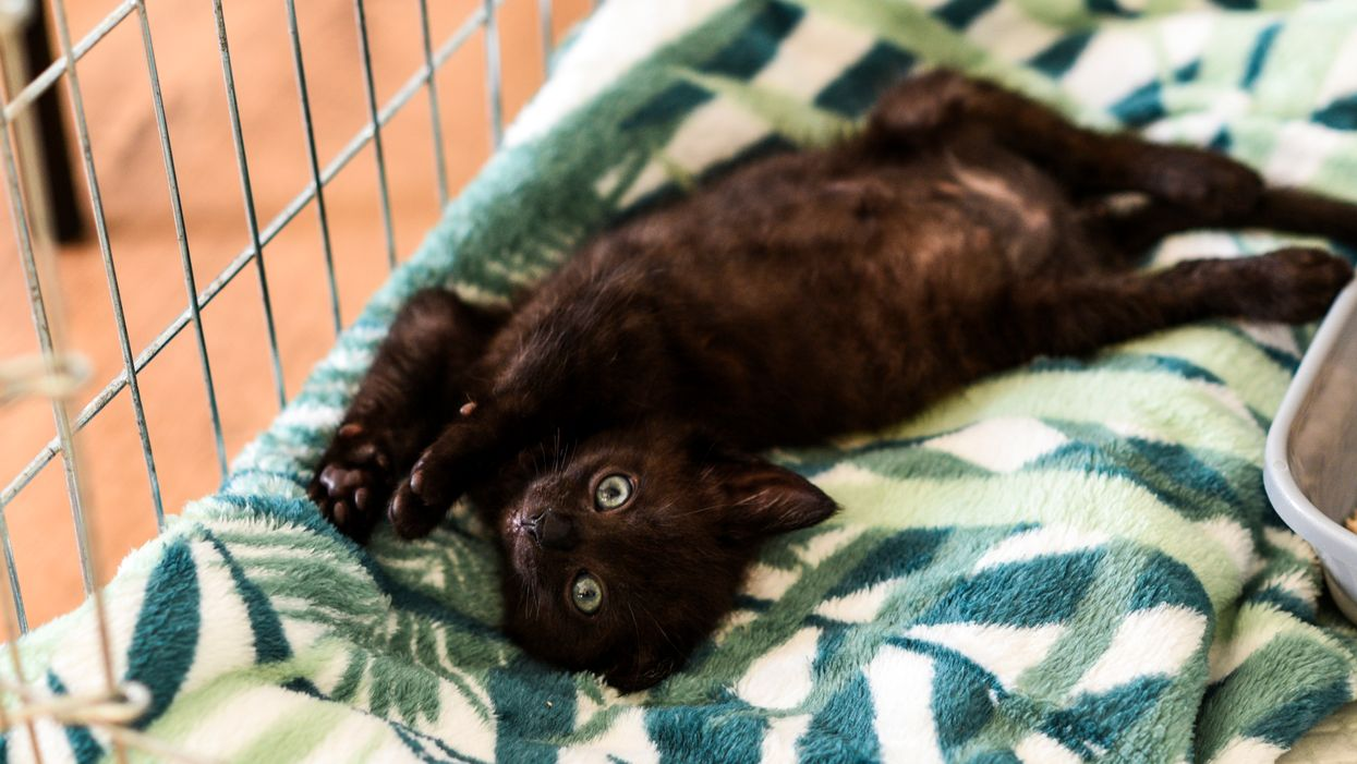 For The Rest Of The Month You Can Adopt A Kitty For Free At This Tampa Animal Shelter
