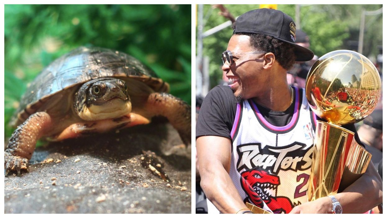 The Toronto Zoo Has Just Named These Adorable Baby Turtles After The Raptors (PHOTOS)