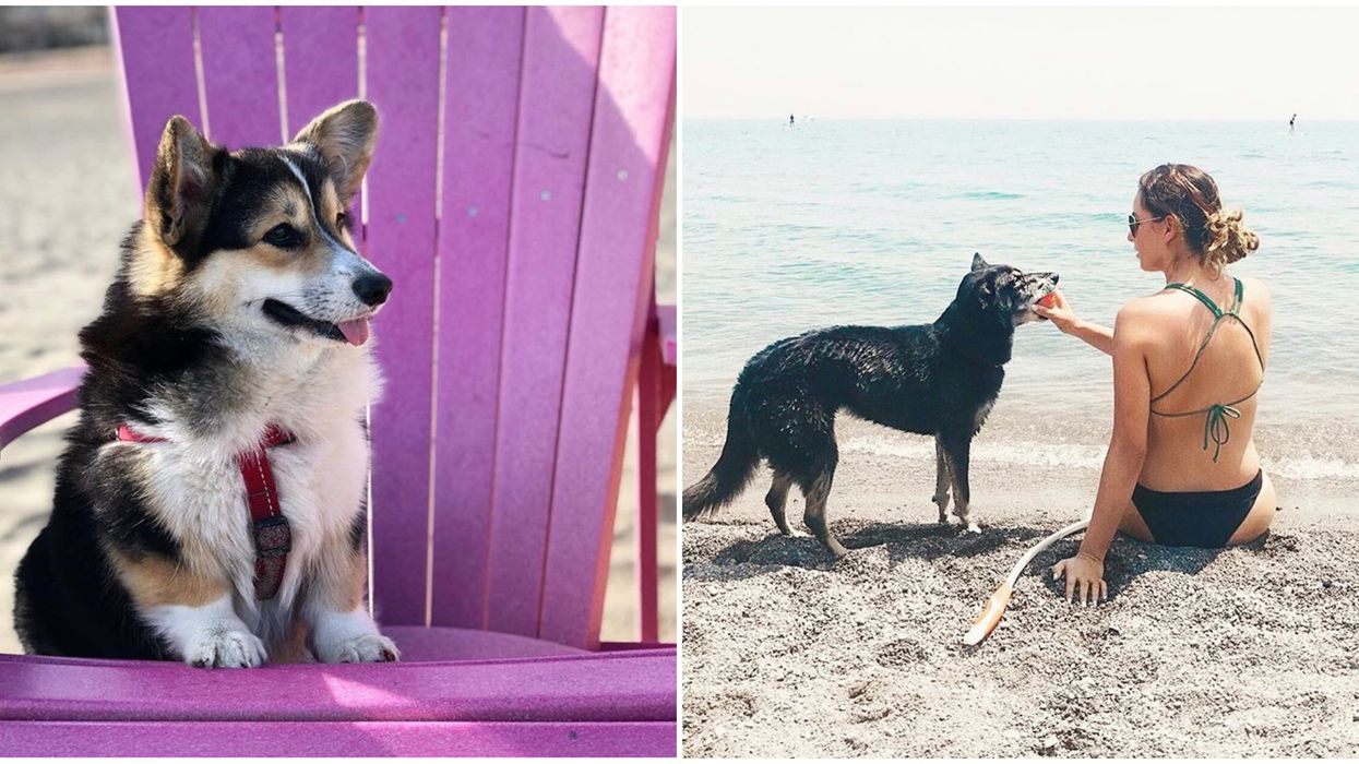 8 Beaches In Ontario You Can Bring Your Dog To This Summer