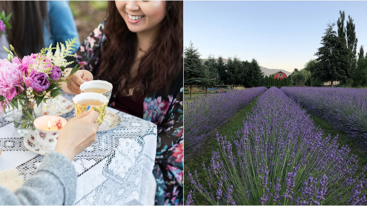 You Can Have 'High Tea' In A Lavender Field Near Vancouver This Summer