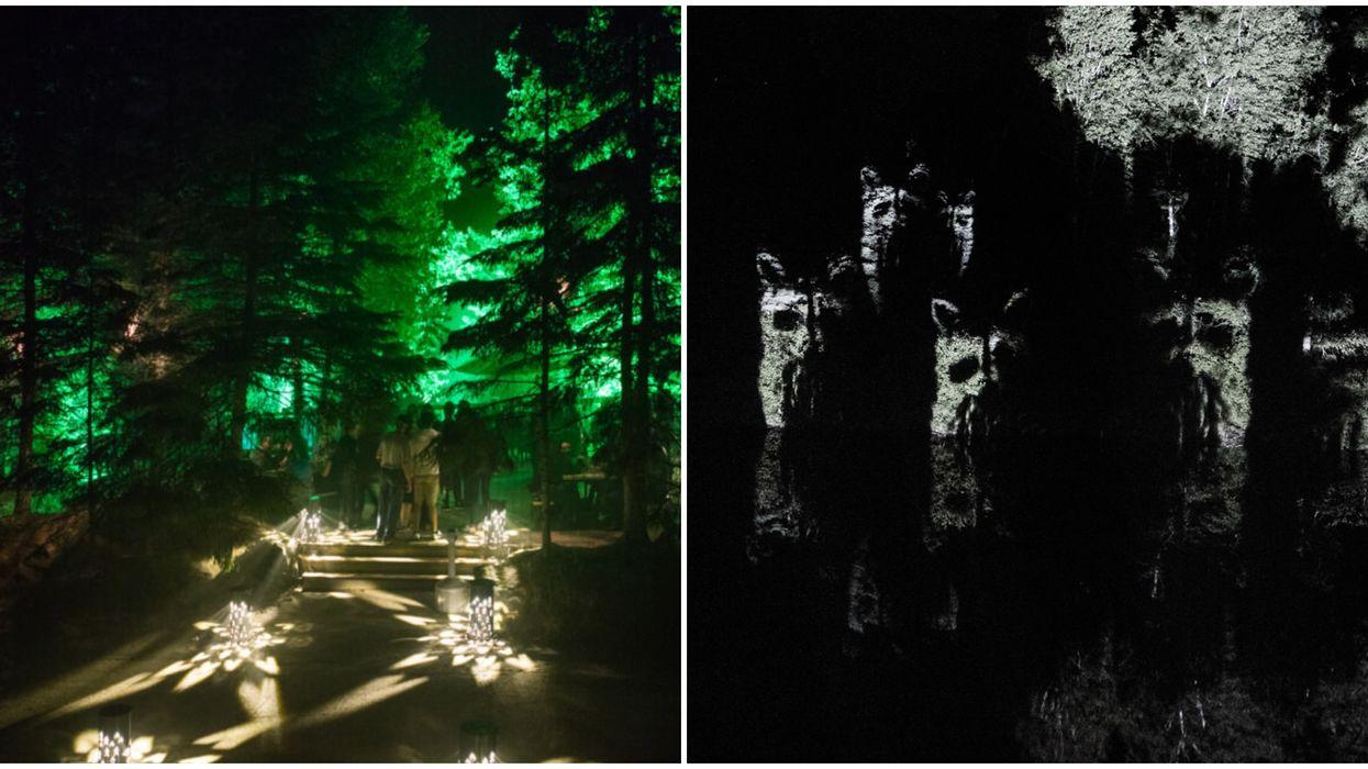 Tu peux parcourir un magnifique trajet lumineux au coeur d'un zoo au Québec