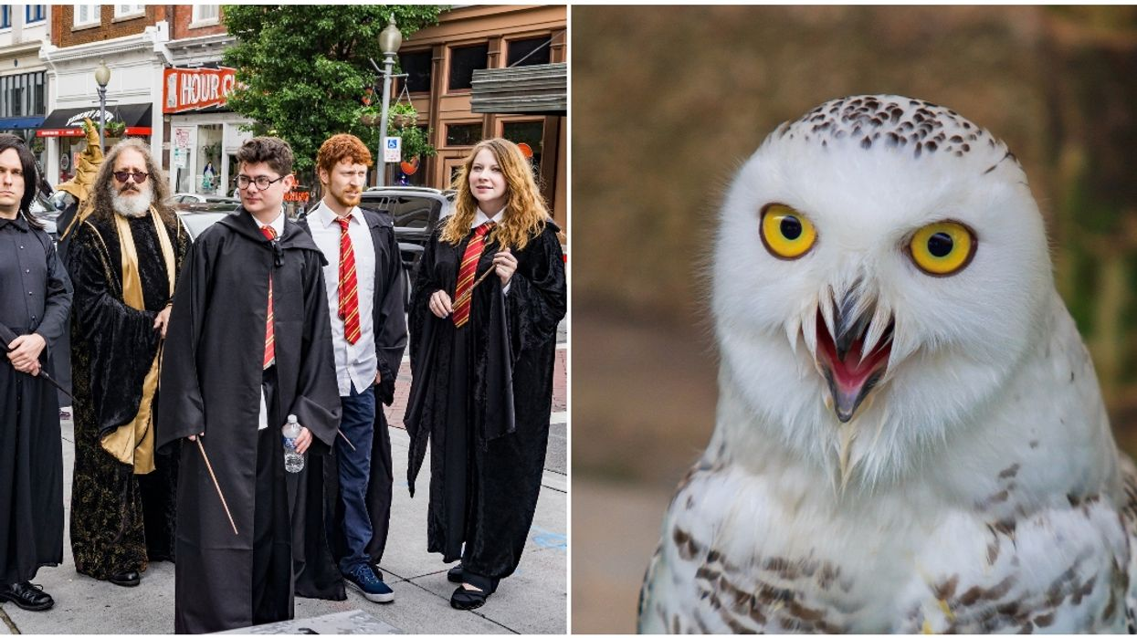 This Northern Florida Zoo Is Hosting A Wild And Wizardly Event Later This Month