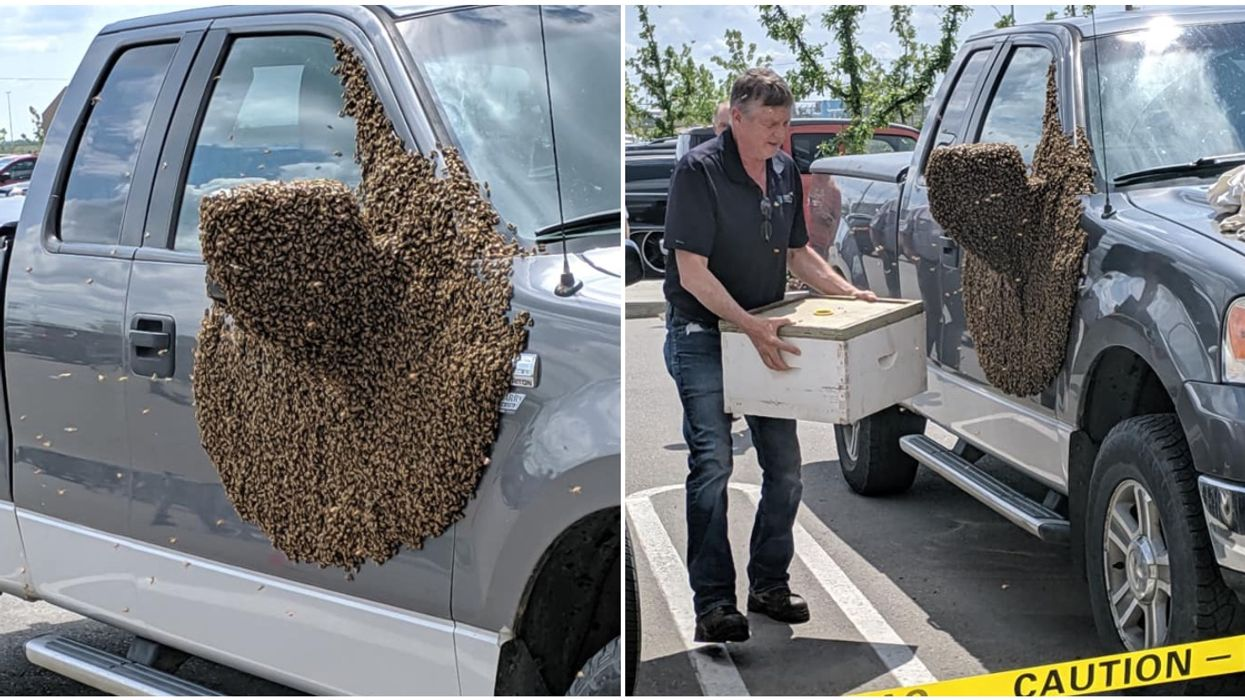Canadian Man Finds His Car Covered By Massive Bee Hive In Costco Parking Lot & The Photos Are Unbelievable