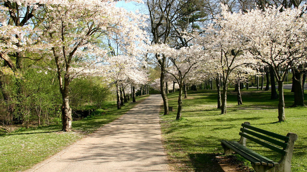 High Park Cherry Blossom Season Won't Be Normal This Year