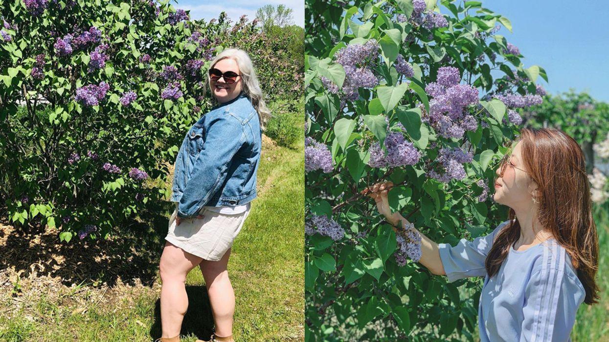 This Enchanting Ontario Lilac Trail Has 300+ Purple Blooming Plants
