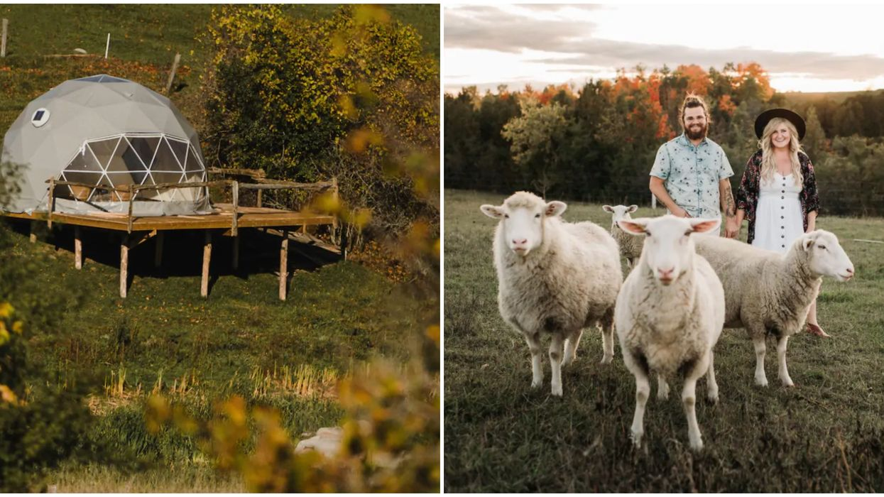 You Can Sleep In A Cozy Dome Near Toronto Surrounded By Alpacas & Sheep