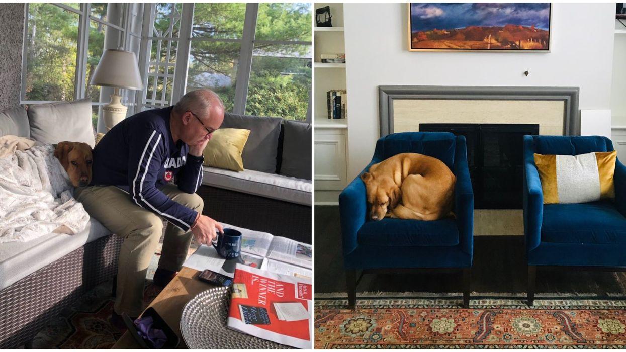 Erin O'Toole's Dog Now Has Social Media & He's The Goodest Boy