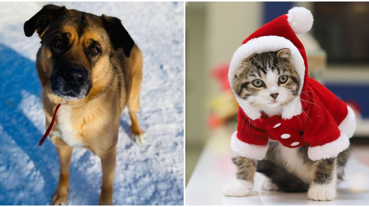 Pet Adoption In Canada: Rescue Groups Are Trying To Find Fur-Ever Homes For The Holidays