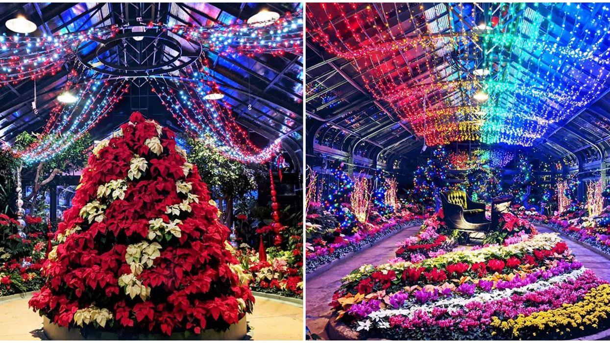 This Twinkling Christmas Garden Near Toronto Looks Like The Sugar Plum Fairy's Backyard