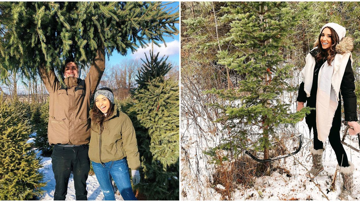9 Christmas Tree Farms Near Ottawa Where You Can Spruce Up Your Holiday
