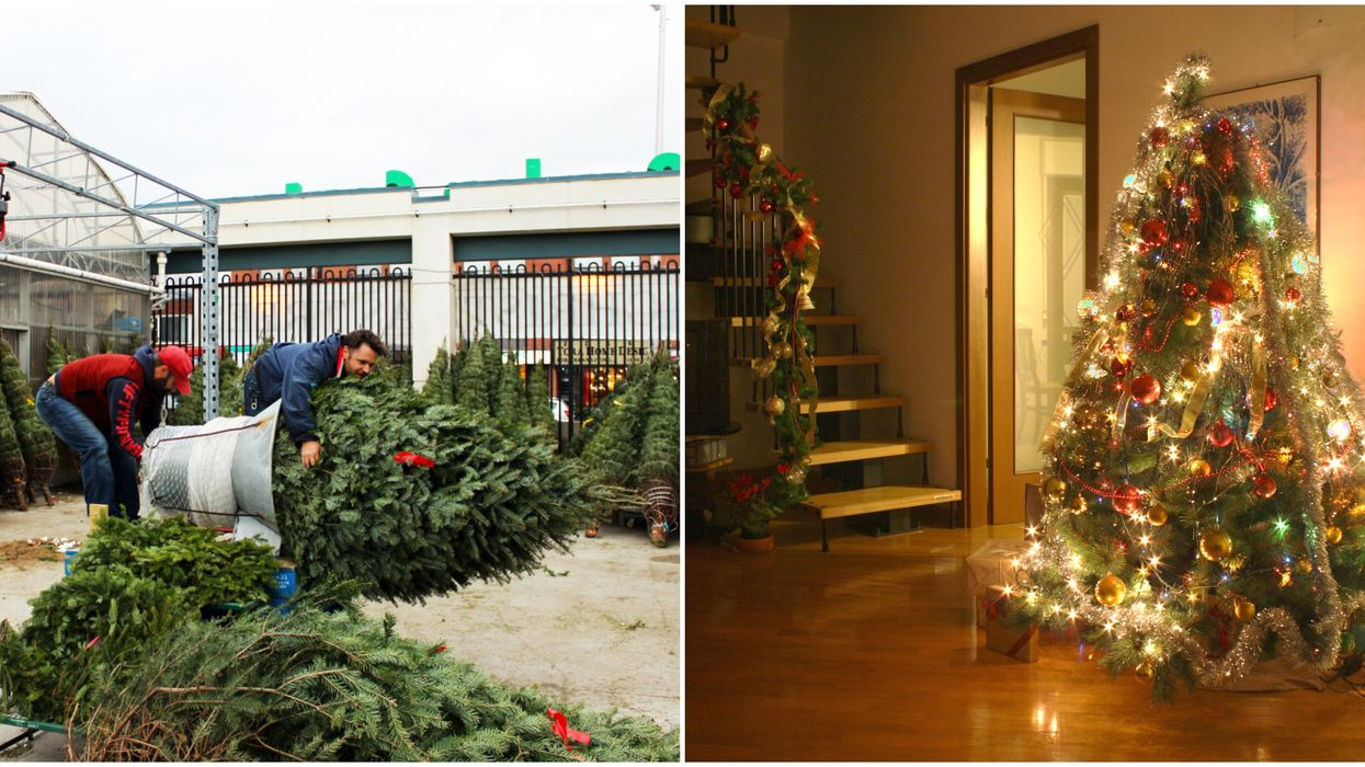 These Toronto Christmas Tree Delivery Services Are Just Too Convenient To Say No To