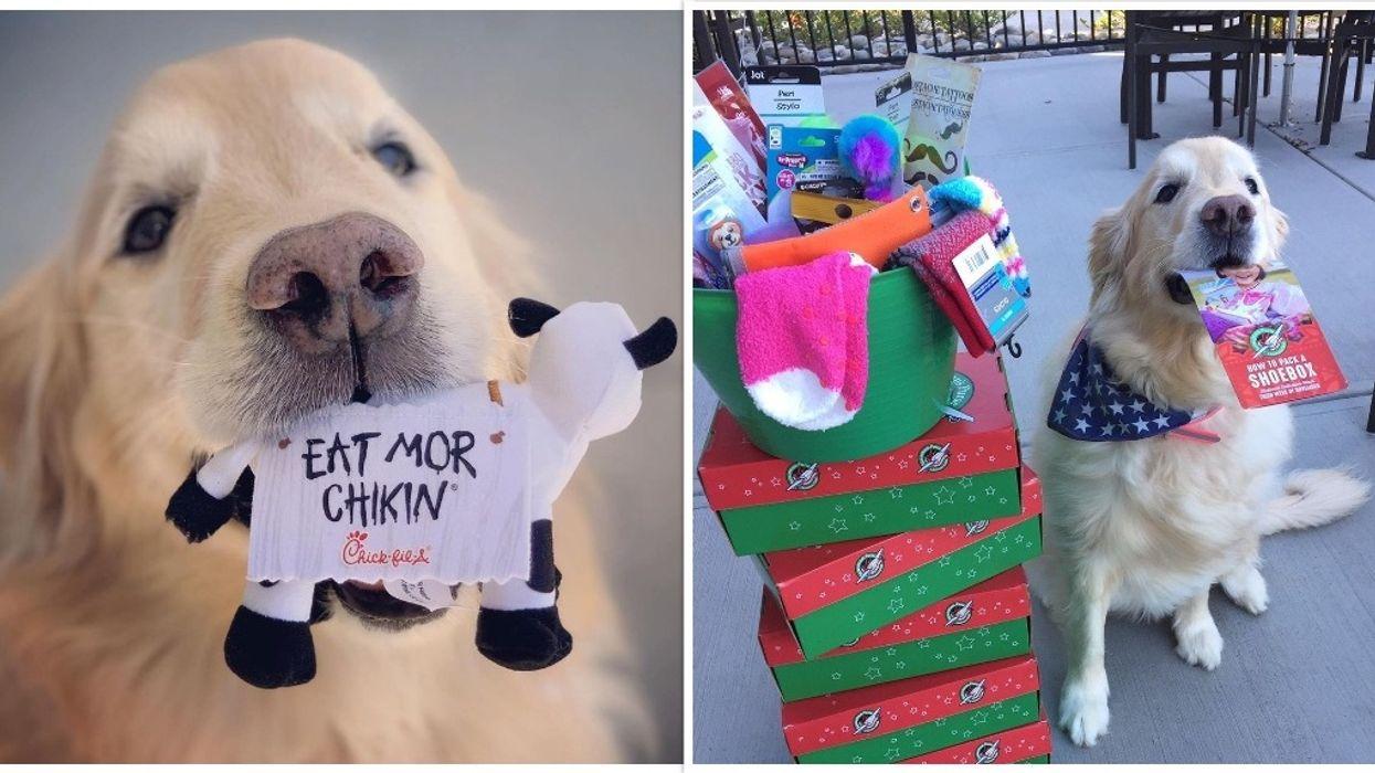Chick-fil-A Chapel Hill North Carolina Dog Delivers Food