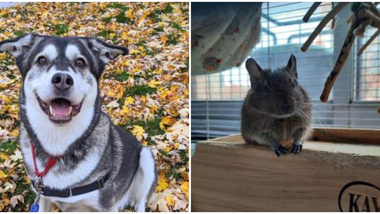 11 animaux trop mignons qui n'attendent qu'à être adoptés à la SPCA de Montréal