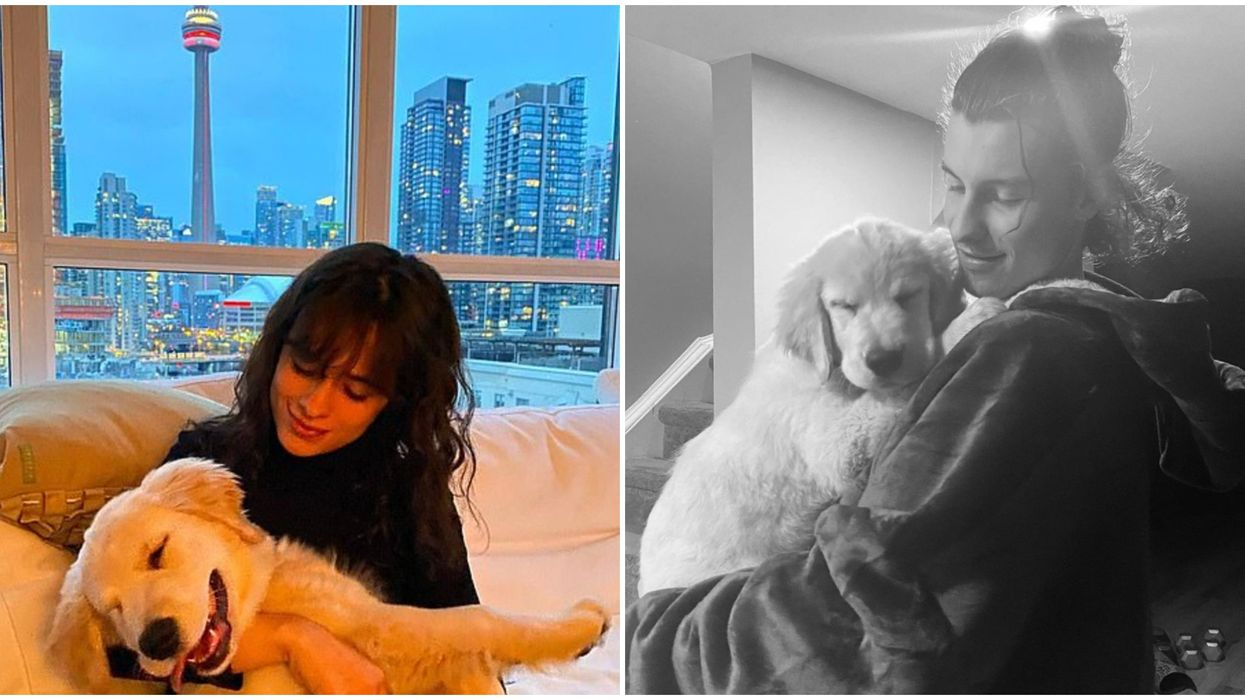 Shawn Mendes Took His Puppy Around Downtown Toronto & It Was Precious (PHOTOS)