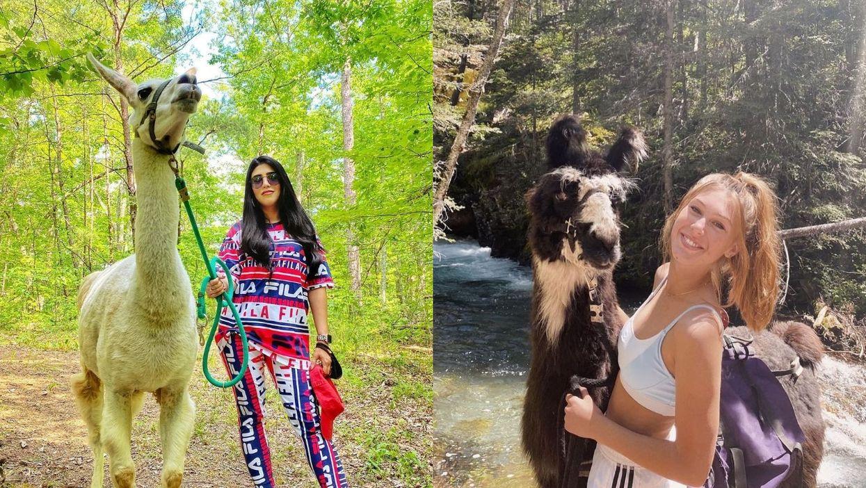 Smoky Mountain Llama Treks Tennessee