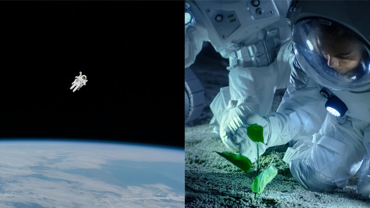 Canadian Space Agency Is Looking For Help Developing Food Astronauts Can Make In Space