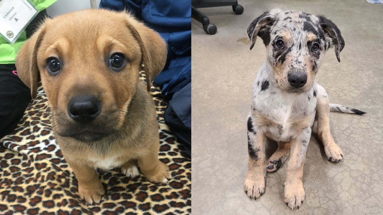 Rescue Puppies Were Named After 'Schitt's Creek' Characters & The Photos Are So Cute