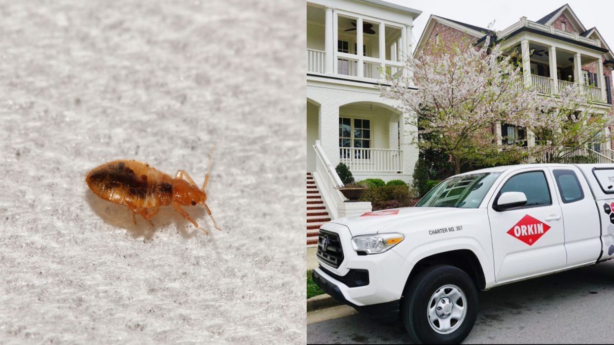 Bed Bugs In Canada Are In So Many Cities & One Province Has Been Hit Hardest