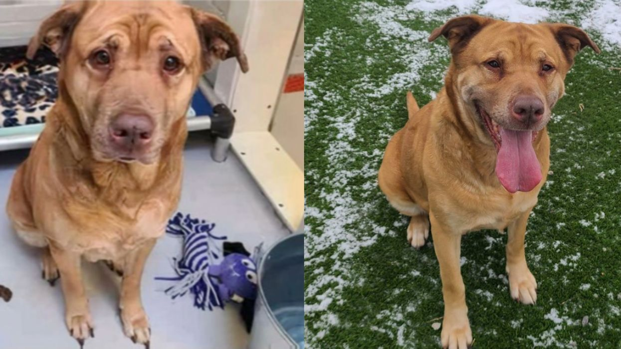 Toronto's Lost Dog Mirabelle Was Returned To The Shelter & Needs A Home Once Again